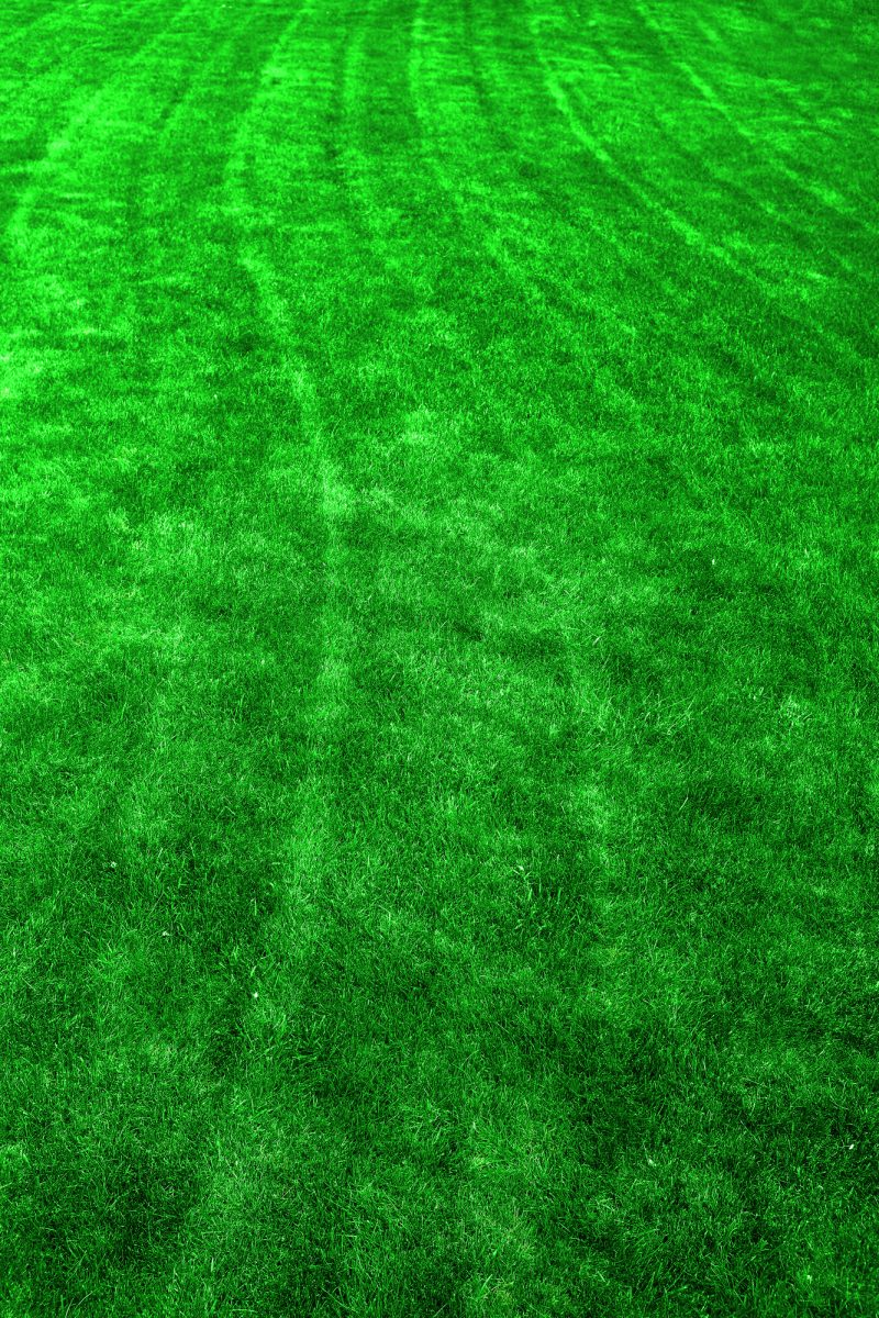 Green Lawn with Mowing Lines Growth
